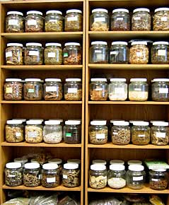 Austin Herbal Pharmacy